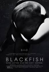 Blackfish 1